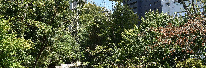 Arbres et végétation le long Veveyse
