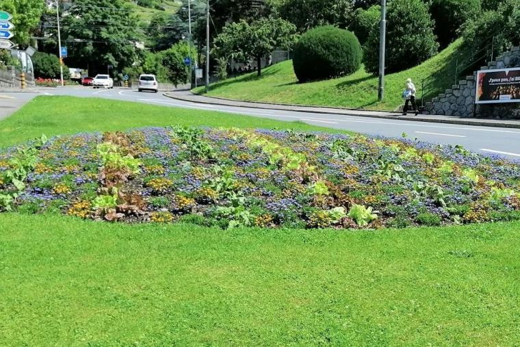 Des légumes dans les massifs floraux à Vevey