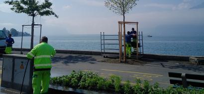 Les jardiniers replantent des arbres